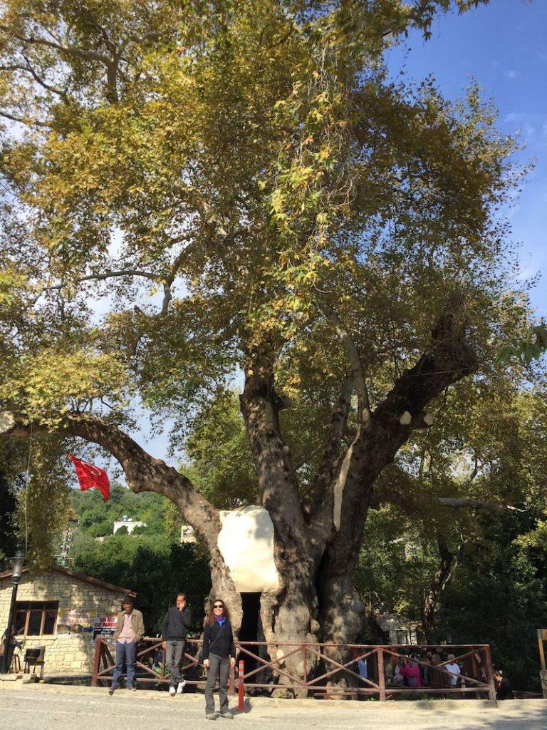 Hıdırbey Köyü ve Çınar Ağacı
