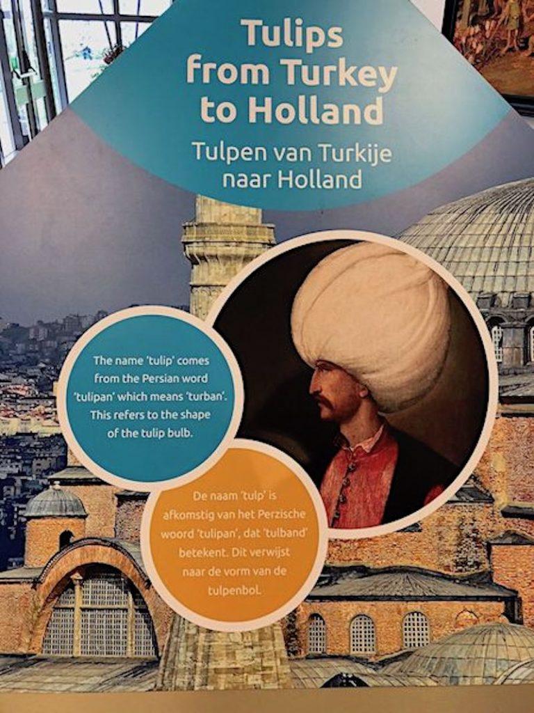 Hollanda'nın lale ile tanışması
