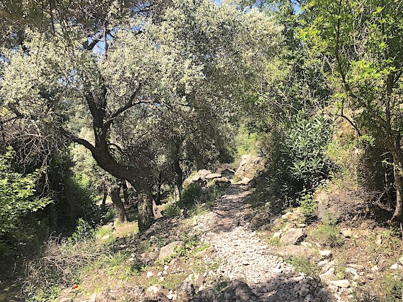 Kirme - Faralya arası orman yolu