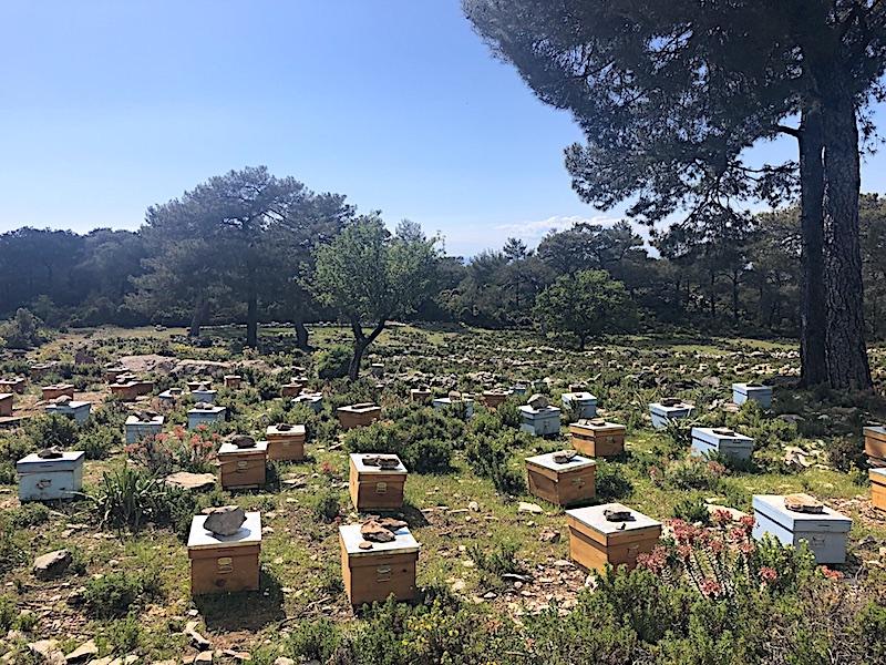 Likya yolundaki arı kovanları