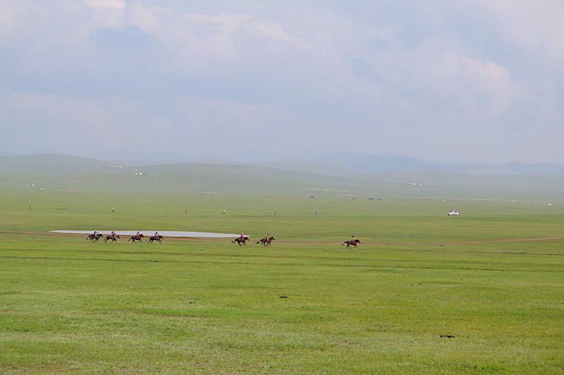 Naadam festivali - at yarışları