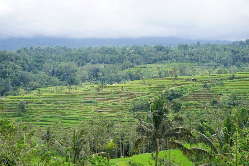 Pirinç Terasları