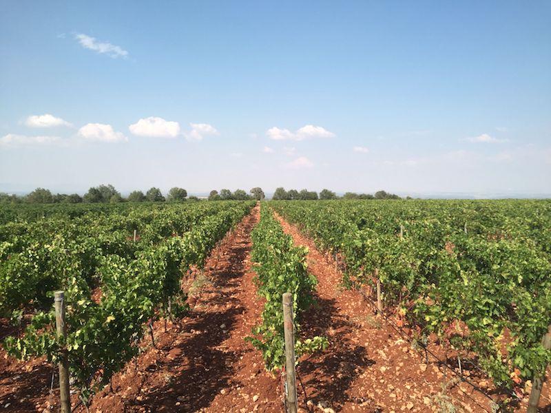 Pamukkale Şarapları Bağları