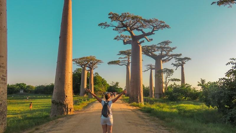 Baobab Yolu / Madagaskar