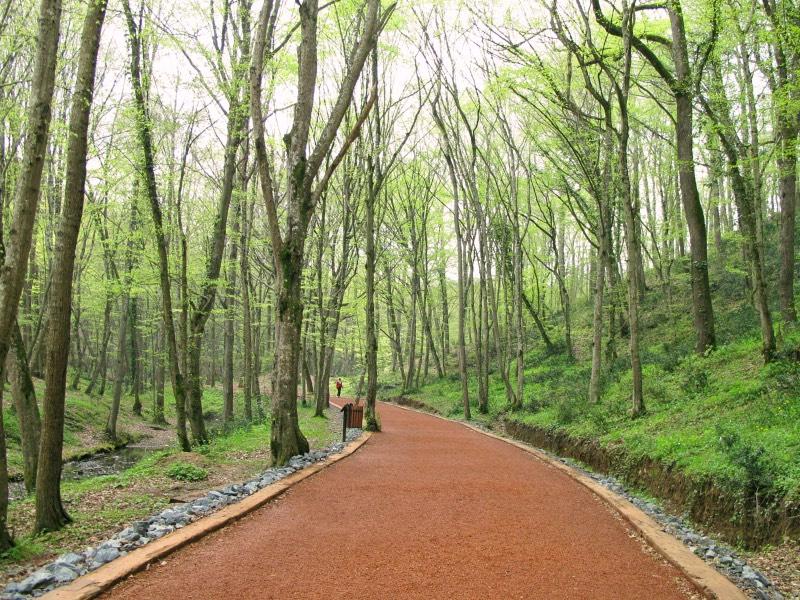 Belgrad Ormanı'na Gitmek için En İyi Zaman