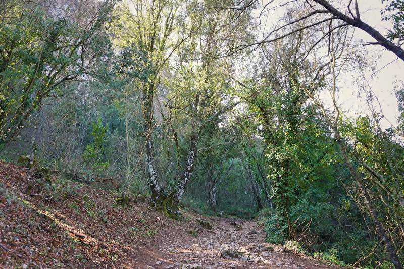 Termessos Antik Kenti içindeki patika