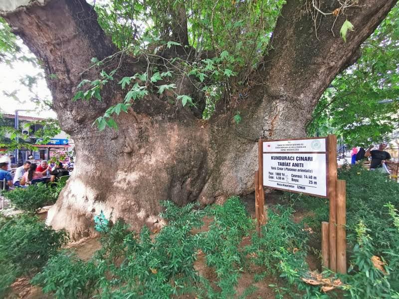 Kunduracı Çınarı Tabiat Anıtı